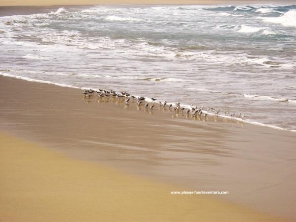 aves en orilla2 - copia