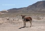 burro2 - copia